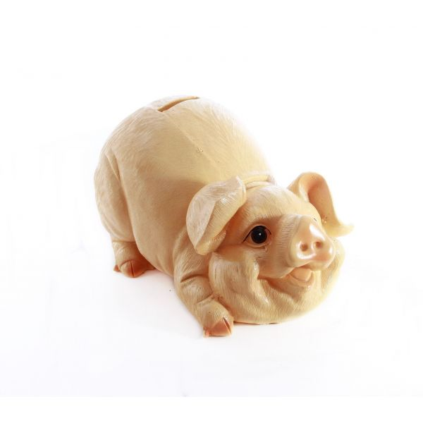 Pusculita porc A54-01